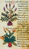 Islamic medicine, Arabic medicine or Arabian medicine refers to medicine developed in the Islamic Golden Age, and written in Arabic, the lingua franca of Islamic civilization. The emergence of Islamic medicine came about through the interactions of the indigenous Arab tradition with foreign influences.<br/><br/>  Translation of earlier texts was a fundamental building block in the formation of Islamic medicine and the tradition that has been passed down. Latin translations of Arabic medical works had a significant influence on the development of medicine in the high Middle Ages and early Renaissance, as did Arabic texts which translated the medical works of earlier cultures.